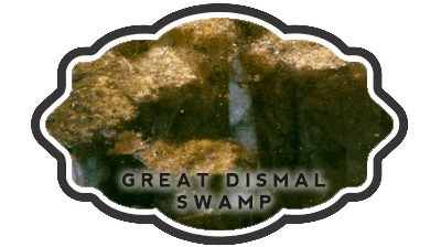 The Mysteries of the Great Dismal Swamp